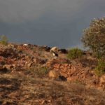 Landscape Mixtec Highlands CADA Foundation